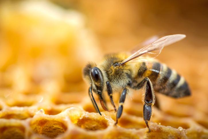 ape alveare favo miele