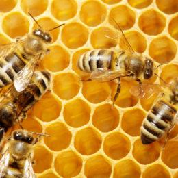 api,alveare-121341141