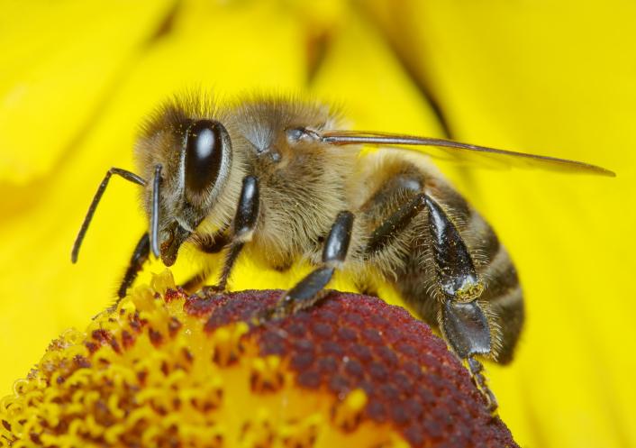 api, fiori-144800666