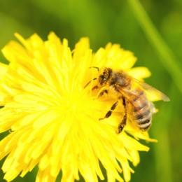 api,fiore-156718187