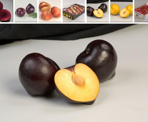 fruitlogistica-albicocca