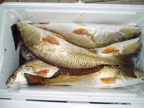 pesce puzza