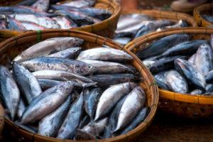 pesce istamina