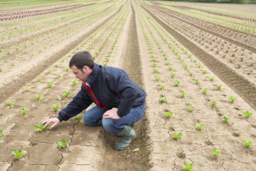 agricoltura verdura
