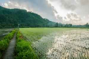 campi riso arsenico inorganico