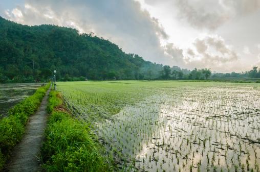 campi riso