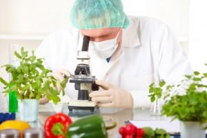 ricercatore scienza cibo ogm