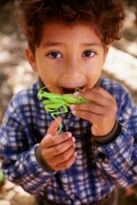 bambino insetti