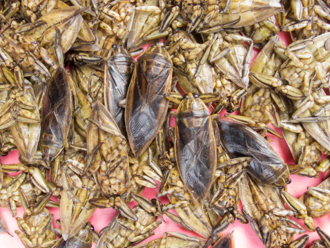 Cibo prelibato delle cucine vietnamita, filippina e thailandese i Belostomatidi sono insetti acquatici che possono raggiungere anche gli 11–12 cm di lunghezza