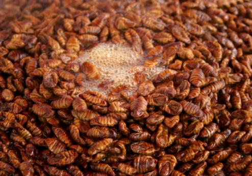 baco-seta-insetti