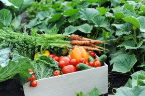 frutta verdura cassetta
