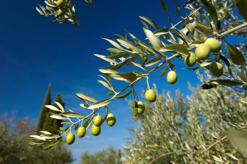 olive olio ulivo