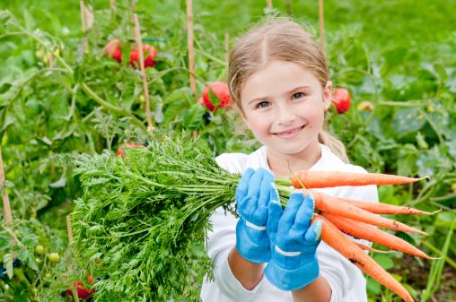 orto raccolta carote