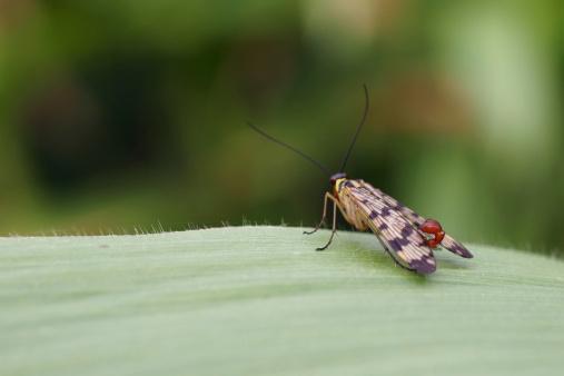 insetti  piante ogm