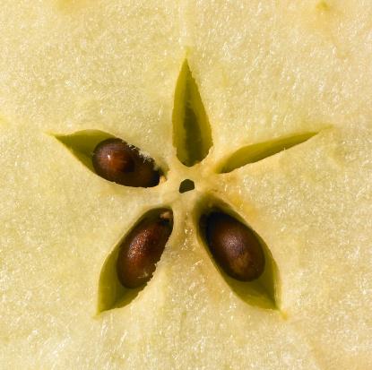 mela semi frutta 144276097