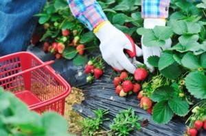 frutti di bosco campi 164207979