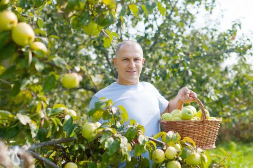 mele contadino campi 166495620
