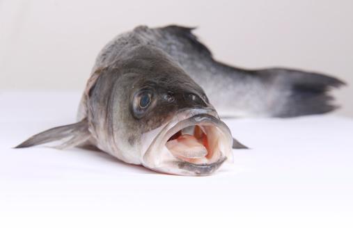 pesce spigola 173434911