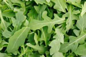 insalata verdura rucola con Salmonella