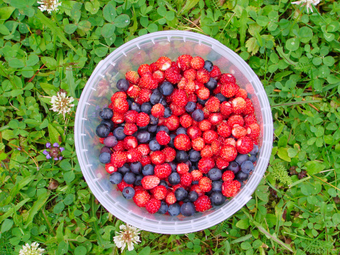 frutti bosco, 136908784
