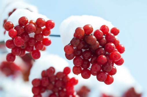 frutti bosco181544219