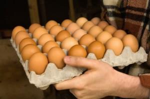 uova  87631971 Salmonella nelle uova