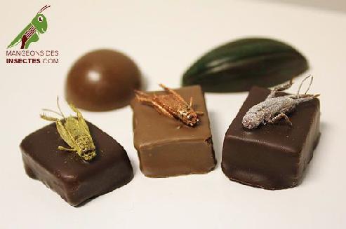 cioccolatini insetti cavallette micronutris