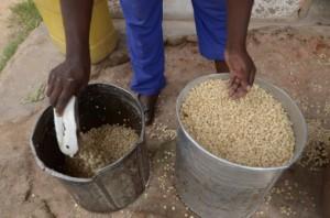 contadino semi africa 134571550