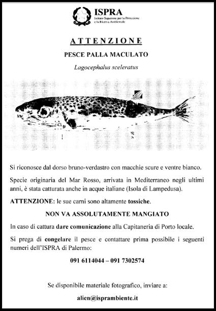 ispra pesce palla manifesto porti