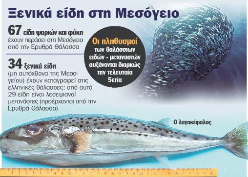 pesce palla allerta grecia 2