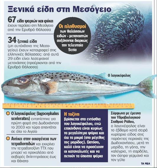 pesce palla allerta grecia