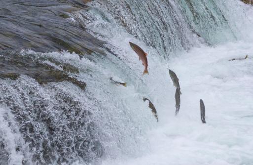 salmono pesci 175945486