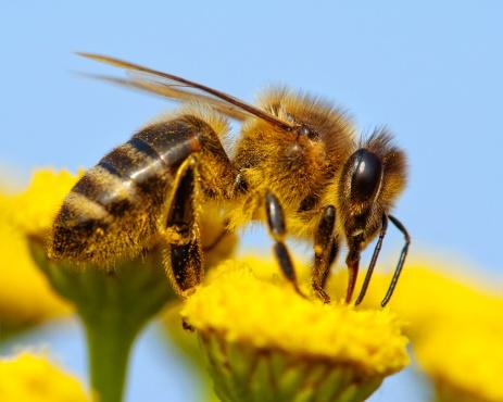 api fiori miele 162660882