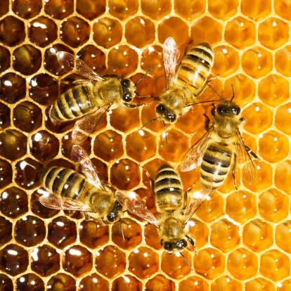 scomparsa delle api miele alveare 156146335