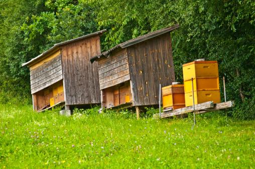 alveari arnie scomparsa delle api moria alveare miele