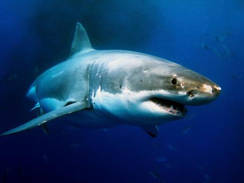 estinzione squalo