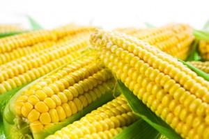 MAIS OGM 462785495