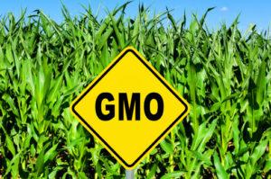 OGM 463270077