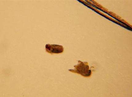 fagioli esselunga insetti