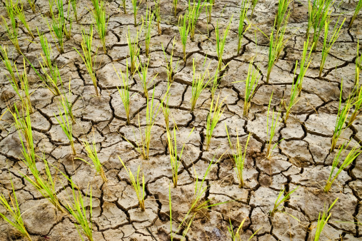 globalizzazione alimentare campi desertificazione 465308835