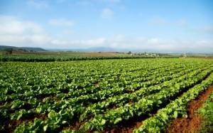 campi agricoltura biologica 178131419