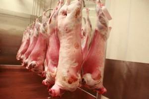 carne  macello 478049791