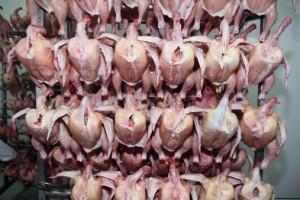 macello carne acido peracetico479121765