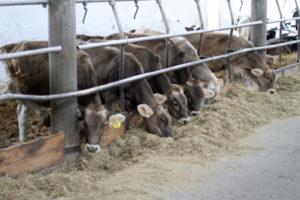 Carne sostenibile allevamento 186989214