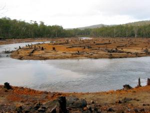 deforestazione acqua iStock_000000883324_Small
