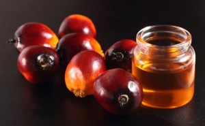 Oil palm fruits and oil bottle on a leaves background olio di palma