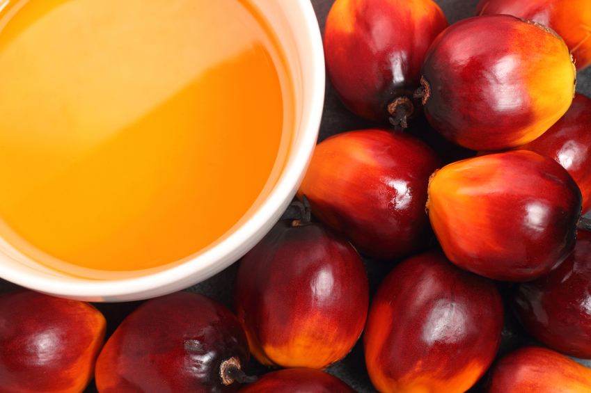 olio di palma Oil palm fruit and cooking oil