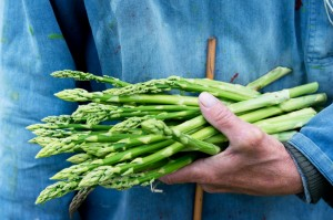 verdura asparagi iStock_000020860677_Small