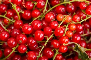 Red currant berry close up colorful fruit background