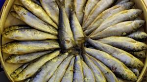 European anchovy (Engraulis encrasicolus) laid up forming a circle